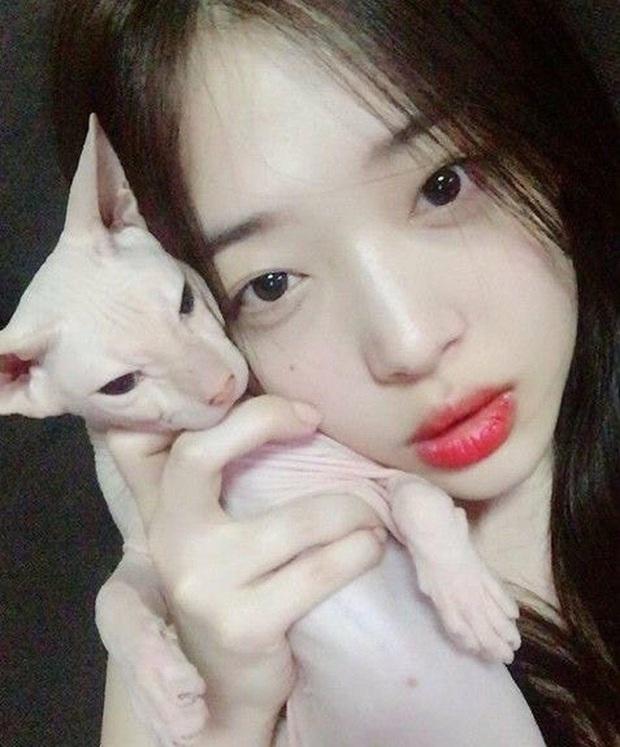 Heechul xác nhận nuôi thú cưng của Sulli, tiết lộ từng khóc không dứt vì tình trạng của chú mèo đắt nhất nhì hành tinh - Ảnh 2.