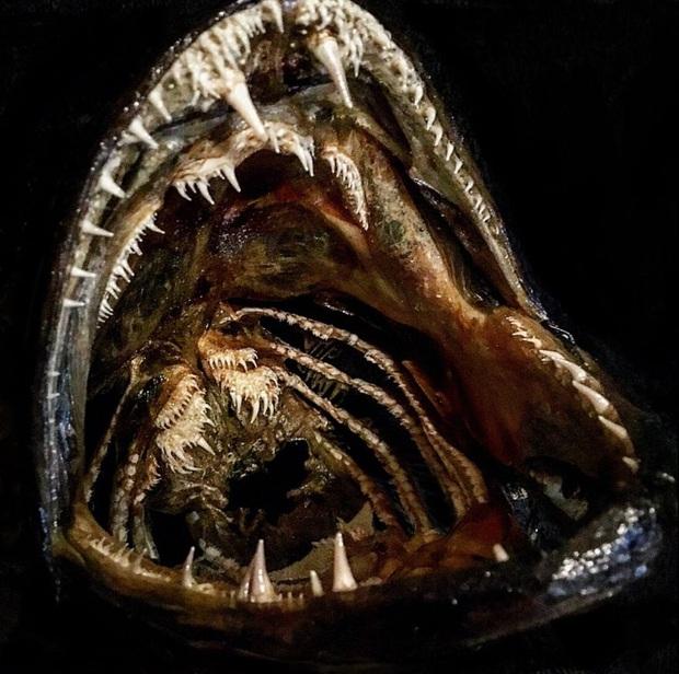 Loạt ảnh những con thủy quái sống quanh quẩn dưới nước với hàm răng chi chít và nhọn hoắt mà khi nhìn vào đã thấy gai hết cả người - Ảnh 9.