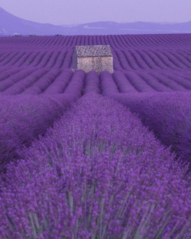 Mãn nhãn trước cánh đồng hoa oải hương đẹp đến ná thở ở Pháp, nơi được nhà mốt Jacquemus lựa chọn làm sàn diễn thời trang cho bộ sưu tập khép lại năm 2019 - Ảnh 4.