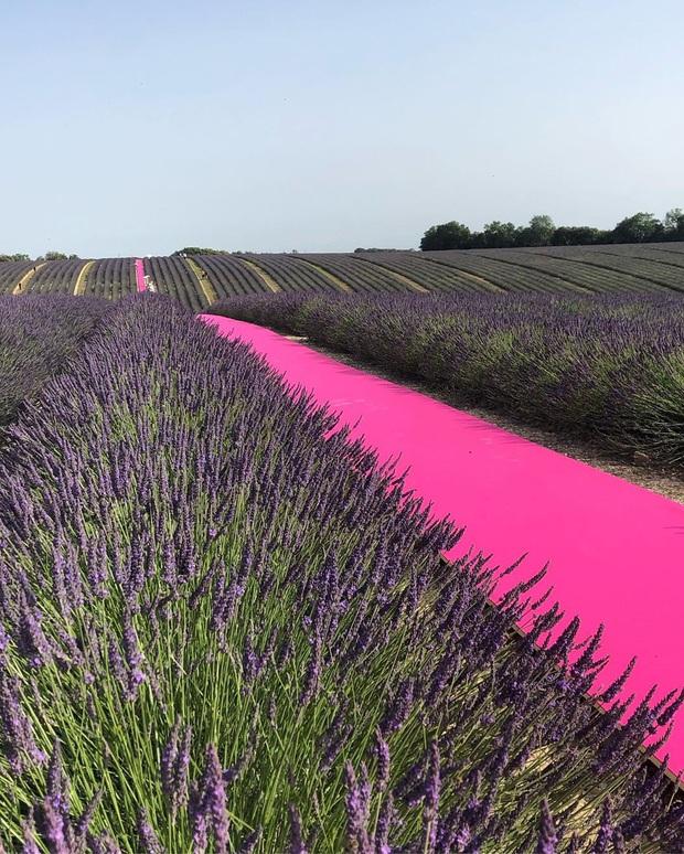 Mãn nhãn trước cánh đồng hoa oải hương đẹp đến ná thở ở Pháp, nơi được nhà mốt Jacquemus lựa chọn làm sàn diễn thời trang cho bộ sưu tập khép lại năm 2019 - Ảnh 6.