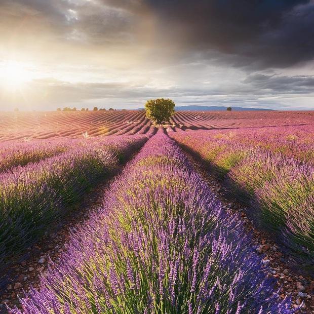Mãn nhãn trước cánh đồng hoa oải hương đẹp đến ná thở ở Pháp, nơi được nhà mốt Jacquemus lựa chọn làm sàn diễn thời trang cho bộ sưu tập khép lại năm 2019 - Ảnh 1.