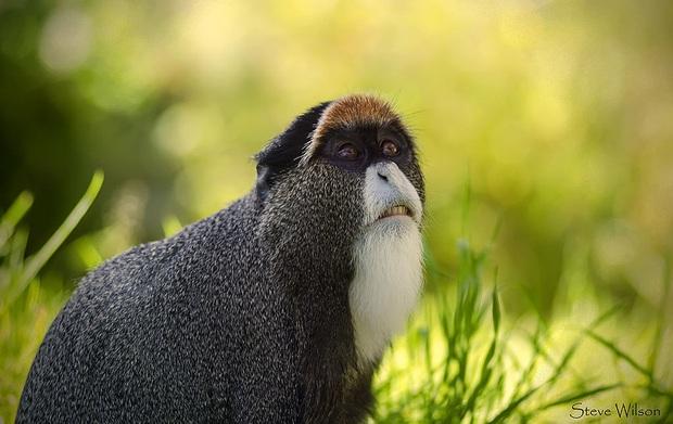 Những loài động vật bị lỗi ngay từ khâu thiết kế của mẹ tự nhiên  - Ảnh 2.