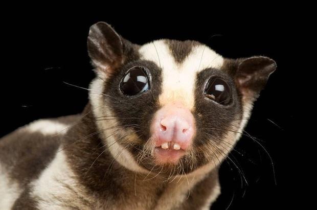 Những loài động vật bị lỗi ngay từ khâu thiết kế của mẹ tự nhiên  - Ảnh 3.