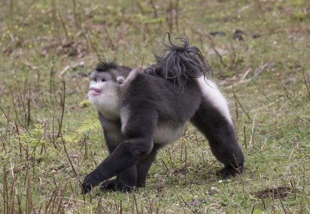 Những loài động vật bị lỗi ngay từ khâu thiết kế của mẹ tự nhiên  - Ảnh 4.