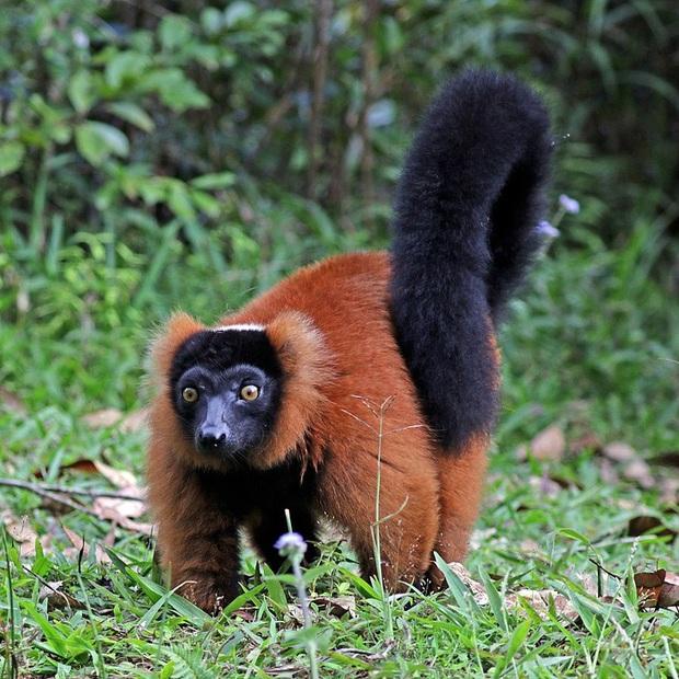 Những loài động vật bị lỗi ngay từ khâu thiết kế của mẹ tự nhiên  - Ảnh 13.