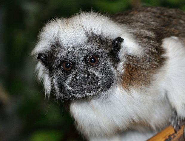 Những loài động vật bị lỗi ngay từ khâu thiết kế của mẹ tự nhiên  - Ảnh 15.
