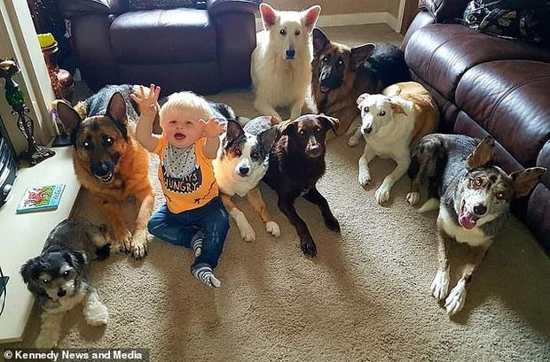 Bà chị sở hữu siêu năng lực: Bắt 17 chú chó, mèo nhà mình ngồi im một chỗ với nhau để chụp ảnh - Ảnh 2.