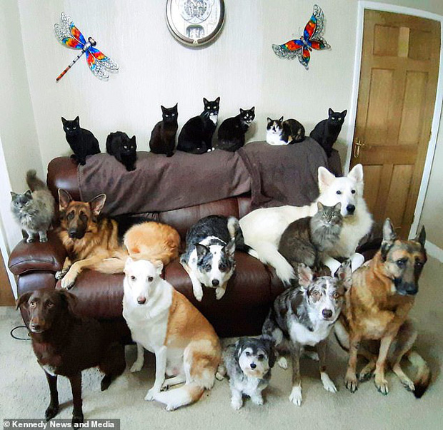 Bà chị sở hữu siêu năng lực: Bắt 17 chú chó, mèo nhà mình ngồi im một chỗ với nhau để chụp ảnh - Ảnh 1.