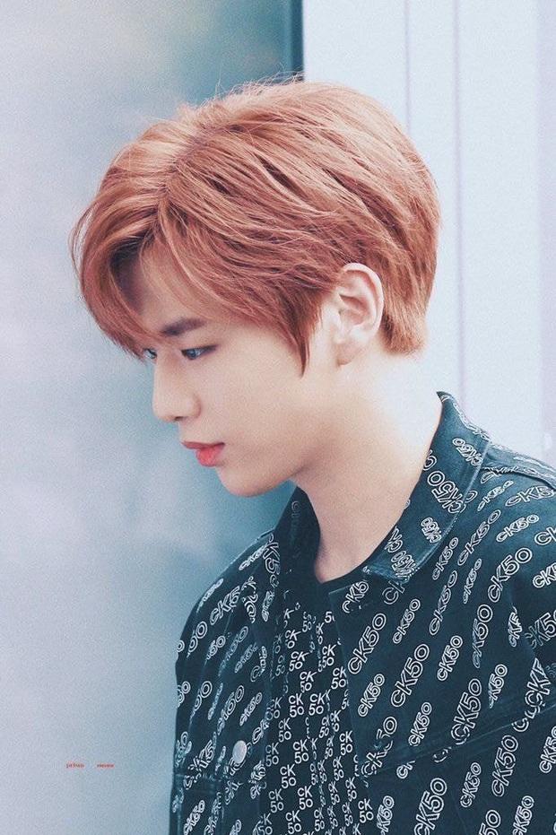 Kang Daniel tuyên bố bị trầm cảm và rối loạn hoảng sợ sau lùm xùm gian lận, thêm nạn nhân của Knet sau Goo Hara và Taeyeon? - Ảnh 1.