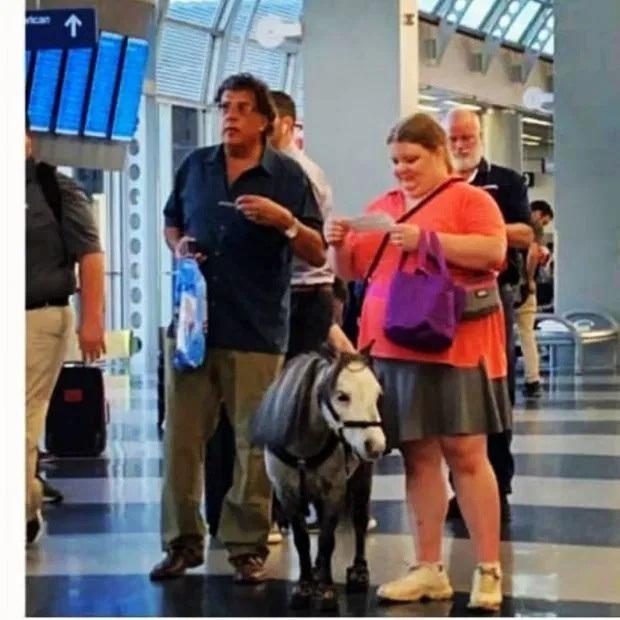Chuyện lạ có thật: Hóa ra ở nước ngoài hành khách còn được phép… dắt thú lên máy bay mà chẳng sợ bị cấm phạt? - Ảnh 4.
