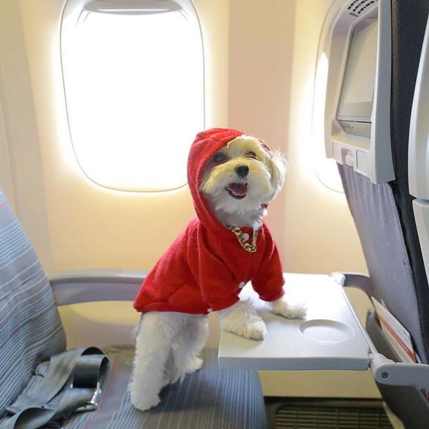 Chuyện lạ có thật: Hóa ra ở nước ngoài hành khách còn được phép… dắt thú lên máy bay mà chẳng sợ bị cấm phạt? - Ảnh 1.