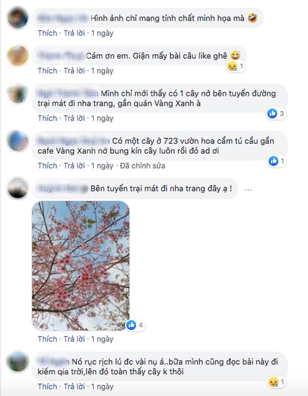 """Góc lừa tình: Dù chưa tới mùa mai anh đào nhưng nhiều fanapge đã đăng thông tin """"hoa nở rộ khắp Đà Lạt"""" gây phẫn nộ - Ảnh 13."""