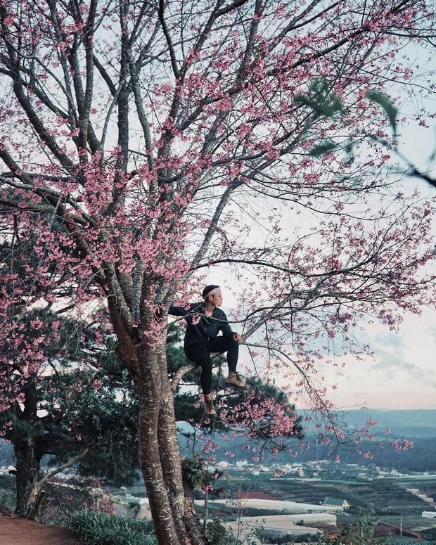"""Góc lừa tình: Dù chưa tới mùa mai anh đào nhưng nhiều fanapge đã đăng thông tin """"hoa nở rộ khắp Đà Lạt"""" gây phẫn nộ - Ảnh 4."""