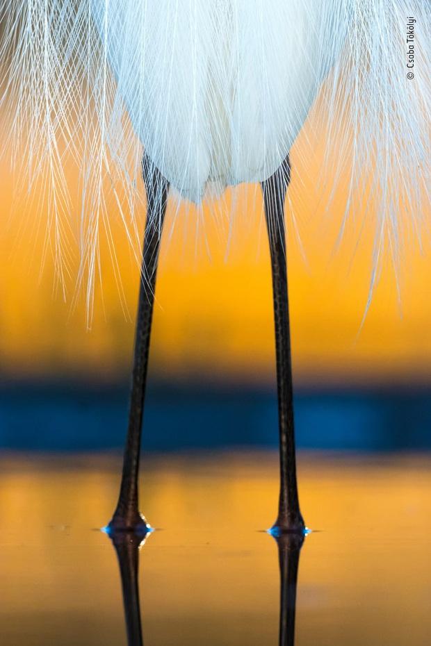 Loạt đề cử ấn tượng cho giải thưởng nhiếp ảnh thế giới hoang dã của năm do Bảo tàng Lịch Sử Tự Nhiên lựa chọn - Ảnh 19.
