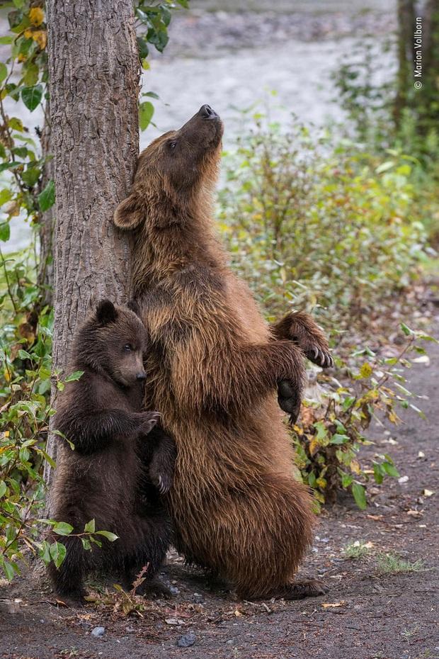 Loạt đề cử ấn tượng cho giải thưởng nhiếp ảnh thế giới hoang dã của năm do Bảo tàng Lịch Sử Tự Nhiên lựa chọn - Ảnh 3.