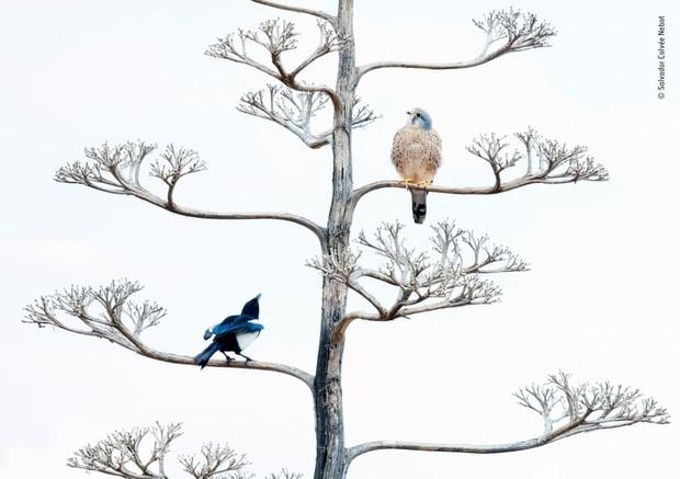 Loạt đề cử ấn tượng cho giải thưởng nhiếp ảnh thế giới hoang dã của năm do Bảo tàng Lịch Sử Tự Nhiên lựa chọn - Ảnh 15.