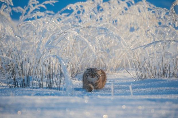 Loạt đề cử ấn tượng cho giải thưởng nhiếp ảnh thế giới hoang dã của năm do Bảo tàng Lịch Sử Tự Nhiên lựa chọn - Ảnh 1.