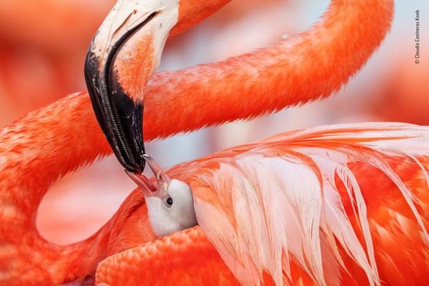 Loạt đề cử ấn tượng cho giải thưởng nhiếp ảnh thế giới hoang dã của năm do Bảo tàng Lịch Sử Tự Nhiên lựa chọn - Ảnh 18.