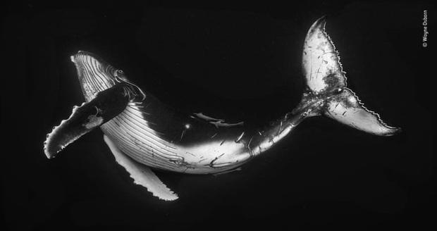 Loạt đề cử ấn tượng cho giải thưởng nhiếp ảnh thế giới hoang dã của năm do Bảo tàng Lịch Sử Tự Nhiên lựa chọn - Ảnh 20.