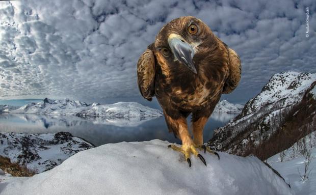 Loạt đề cử ấn tượng cho giải thưởng nhiếp ảnh thế giới hoang dã của năm do Bảo tàng Lịch Sử Tự Nhiên lựa chọn - Ảnh 21.