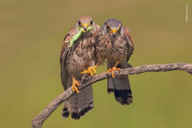 Loạt đề cử ấn tượng cho giải thưởng nhiếp ảnh thế giới hoang dã của năm do Bảo tàng Lịch Sử Tự Nhiên lựa chọn - Ảnh 23.