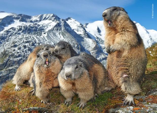 Loạt đề cử ấn tượng cho giải thưởng nhiếp ảnh thế giới hoang dã của năm do Bảo tàng Lịch Sử Tự Nhiên lựa chọn - Ảnh 8.