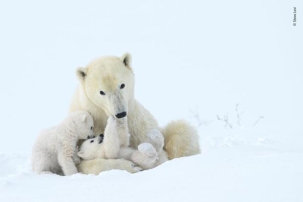 Loạt đề cử ấn tượng cho giải thưởng nhiếp ảnh thế giới hoang dã của năm do Bảo tàng Lịch Sử Tự Nhiên lựa chọn - Ảnh 10.