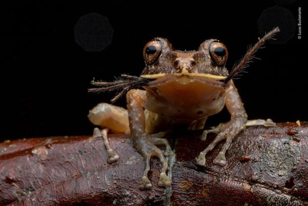 Loạt đề cử ấn tượng cho giải thưởng nhiếp ảnh thế giới hoang dã của năm do Bảo tàng Lịch Sử Tự Nhiên lựa chọn - Ảnh 11.