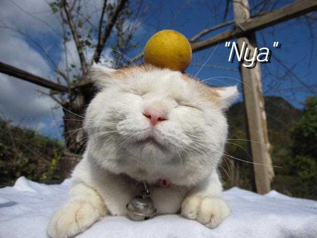 Hội yêu mèo hẳn sẽ lụy tim trước loại phở Meow Việt Nam đáng yêu siêu cấp đang gây sốt tại Nhật Bản - Ảnh 2.