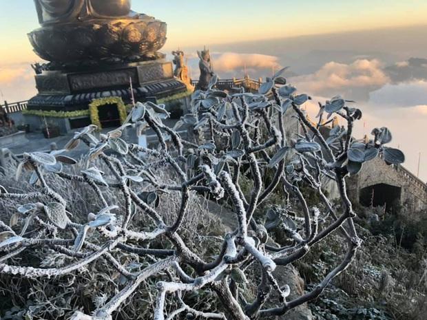 Fansipan hóa núi tuyết, cây cỏ đông cứng trong âm 8 độ - Ảnh 10.