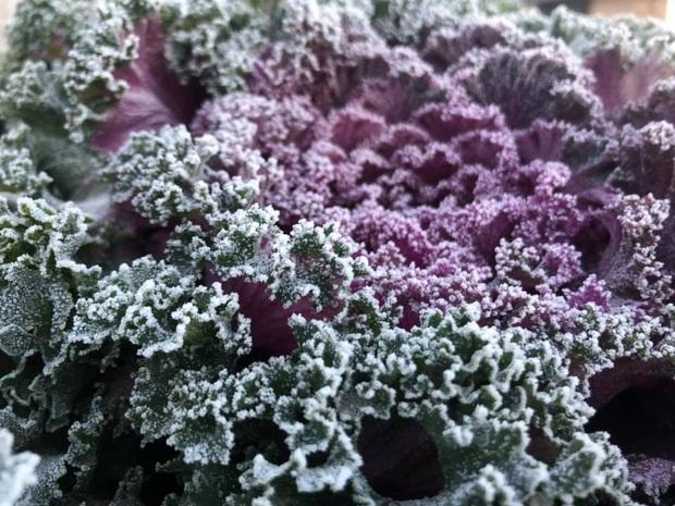 Fansipan hóa núi tuyết, cây cỏ đông cứng trong âm 8 độ - Ảnh 4.