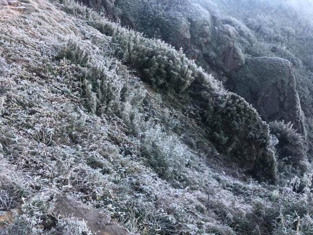 Fansipan hóa núi tuyết, cây cỏ đông cứng trong âm 8 độ - Ảnh 9.