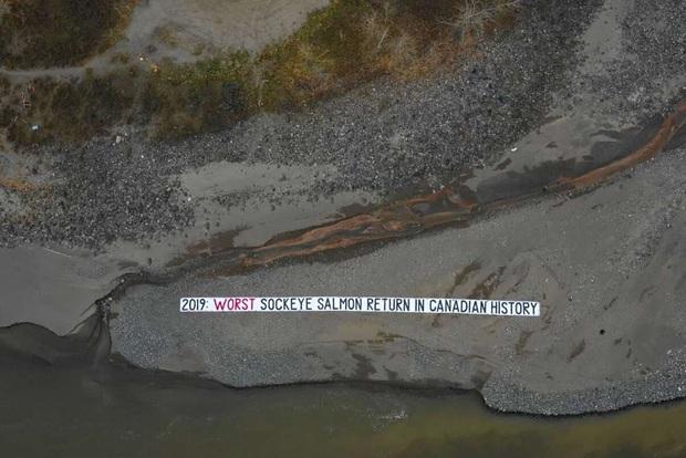 Suốt 2 năm qua người Canada không dám ăn đến một miếng cá hồi hoang dã, nguyên nhân chính là vì đường ống địa ngục này - Ảnh 4.