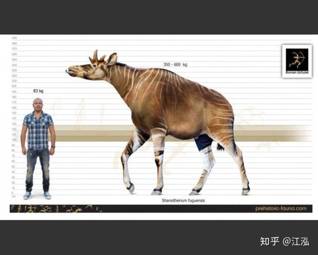 Phát hiện mới, Trung Quốc cũng đã từng tồn tại loài hươu cao cổ với cái đầu vô cùng kì dị - Ảnh 2.