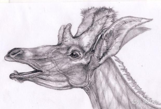 Phát hiện mới, Trung Quốc cũng đã từng tồn tại loài hươu cao cổ với cái đầu vô cùng kì dị - Ảnh 4.