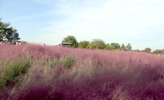 Jaemin và Jeno (NCT) cũng bắt trend nhiệt tình, rủ nhau đi chụp ảnh check in với đồng cỏ hồng và cỏ lau cực hot ở Hàn Quốc - Ảnh 2.