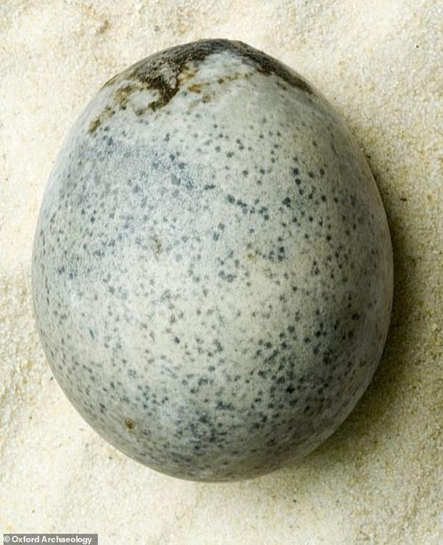 Lỡ tay đánh rơi quả trứng có niên đại 1700 tuổi, các nhà khảo cổ phải chịu đựng mùi hôi thối tích tụ lâu đời nhất thế giới - Ảnh 1.