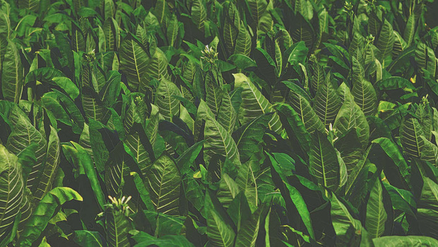 Phát hiện gây shock: Cây cối thực sự đang thét lên vì đau đớn, chỉ là chúng ta không thể nghe thấy - Ảnh 2.
