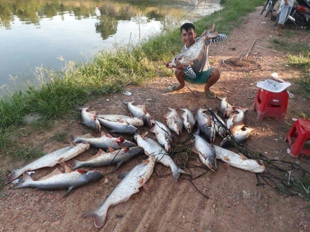 Cần thủ khoe chiến lợi phẩm với hơn 20 chú cá siêu to khổng lồ khiến dân mạng trầm trồ, chủ hồ thì khóc thét - Ảnh 1.