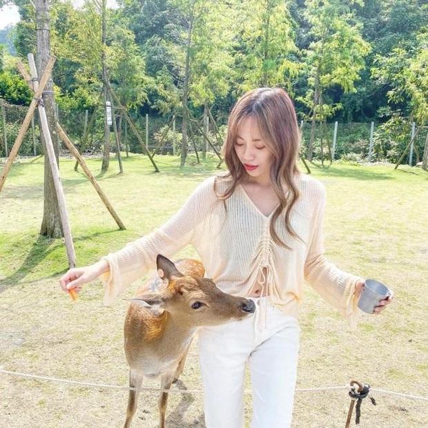 Khám phá xứ sở Bambi ở Đài Loan, nơi mà tất tần tật mọi thứ đều liên quan đến những chú hươu sao cực đáng yêu - Ảnh 2.