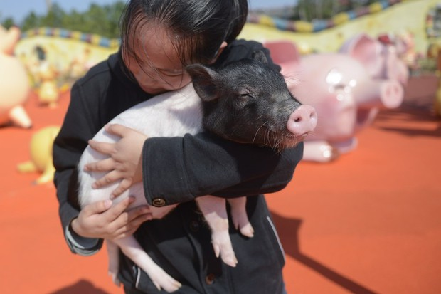 Tết Kỷ Hợi không biết đi đâu chơi, mời ghé thăm công viên Hành tinh Lợn ở Trung Quốc - Ảnh 1.