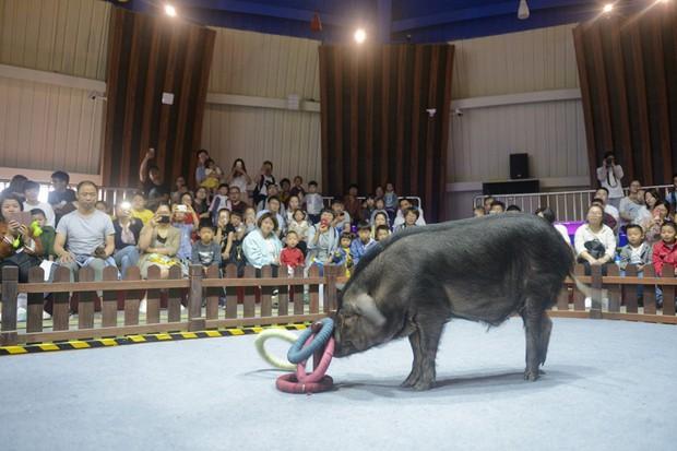 Tết Kỷ Hợi không biết đi đâu chơi, mời ghé thăm công viên Hành tinh Lợn ở Trung Quốc - Ảnh 8.