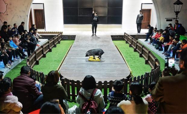 Tết Kỷ Hợi không biết đi đâu chơi, mời ghé thăm công viên Hành tinh Lợn ở Trung Quốc - Ảnh 7.