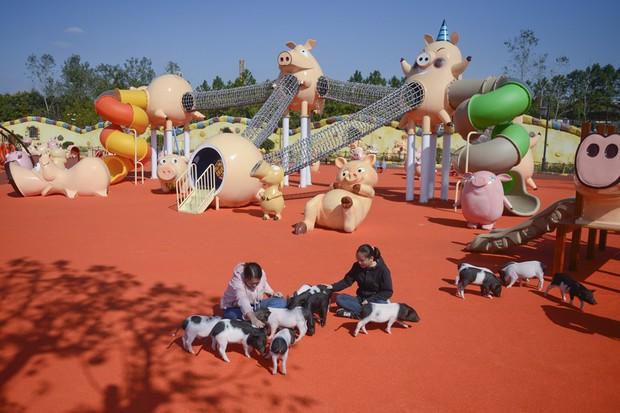 Tết Kỷ Hợi không biết đi đâu chơi, mời ghé thăm công viên Hành tinh Lợn ở Trung Quốc - Ảnh 2.
