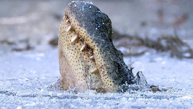 Loài cá sấu tồn tại trên Trái Đất cả triệu năm rồi, phương pháp cho phép chúng sống dai như vậy là đây - Ảnh 1.