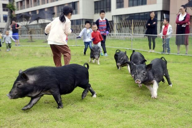 Tết Kỷ Hợi không biết đi đâu chơi, mời ghé thăm công viên Hành tinh Lợn ở Trung Quốc - Ảnh 3.