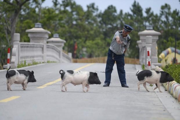 Tết Kỷ Hợi không biết đi đâu chơi, mời ghé thăm công viên Hành tinh Lợn ở Trung Quốc - Ảnh 4.