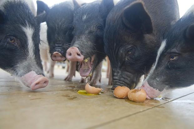 Tết Kỷ Hợi không biết đi đâu chơi, mời ghé thăm công viên Hành tinh Lợn ở Trung Quốc - Ảnh 5.