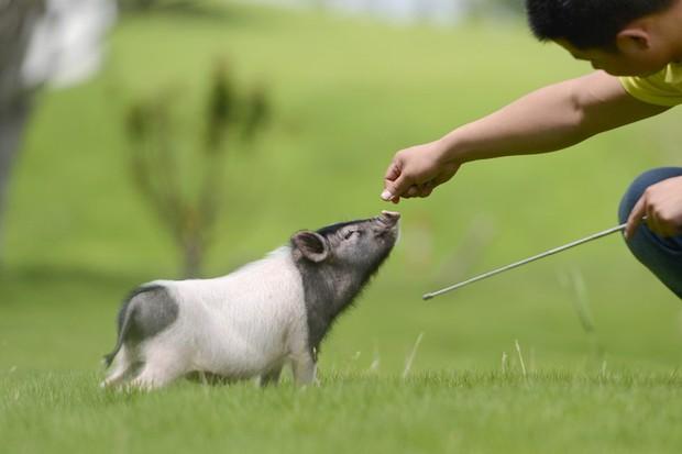 Tết Kỷ Hợi không biết đi đâu chơi, mời ghé thăm công viên Hành tinh Lợn ở Trung Quốc - Ảnh 6.