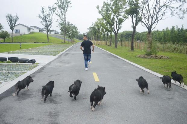 Tết Kỷ Hợi không biết đi đâu chơi, mời ghé thăm công viên Hành tinh Lợn ở Trung Quốc - Ảnh 9.